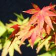 『秋ふかし』 初紅葉