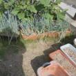 庭のネギなどを干しネギに