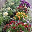 花咲く花壇