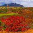 菅平牧場辺りの黄葉 その2