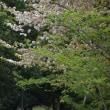 さくらの花びらで春を惜しむ