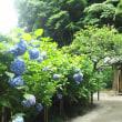 紫陽花の頃、2017年6月 いつくしみ深き花地蔵