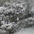 大雪、伊豆東岸の様子2018/01/22午後3時40分