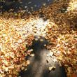 通勤秋風景