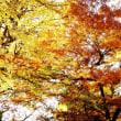 東照宮の紅葉 (4706)