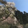 水越峠から金剛山