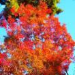 フリースタイル紅葉