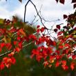 堺市・大泉緑地の風景・・・3