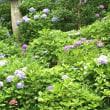 写経と紫陽花。