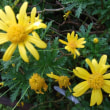 散歩道の花々