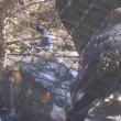 多摩動物公園ハイキング