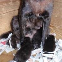 甲斐犬の仔犬が産まれました。