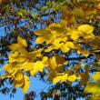 晩秋の頼成の森