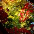 『高麗の色』 大銀杏