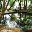 狛江のオアシス「狛江弁財天池特別緑地」