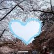 ☆弘前公園でZIP!☆