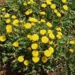 「庭の雑草が弱り始めた胃腸を元気に、気血巡りが良くなります
