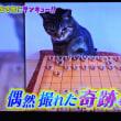 9/21 将棋をさす猫