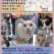 22日浅草でニャンコ譲渡会♥