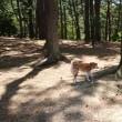 赤松林散歩 180617