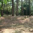赤松林散歩 180716