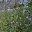 奥裾花自然園
