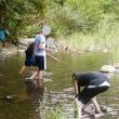 ズナガニゴイ :原始釣リノススメ 実践記録編  釣査141種目