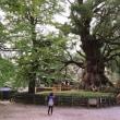 ドジ旅日記巨木棲息の陰謀4