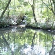 初秋の深緑の風景・・・水の旅を通して