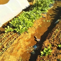 家庭菜園の仕掛り品調べ