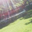 札幌まちなか探検隊 昨日の景色 第60回さっぽろライラックまつり大通会場は27日(日)迄!!