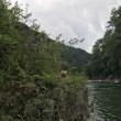 川に行ってきました。