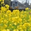 渥美線と菜の花、其の三