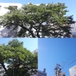9月19日(水)今日の北川桜
