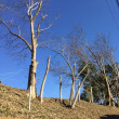 枝切りを  終えて広がる  冬の空
