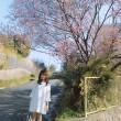 4月8日(日)は兵庫県・芦屋さくらまつり!