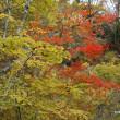 ☆今年のくじゅうの紅葉をふりかえって。。その2☆