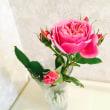 『青木』という薔薇
