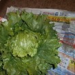 春野菜は?夏野菜 甘くて美味しい自然の恵み・・・