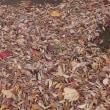 初冬の音・落ち葉やドングリ