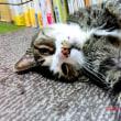 4月は、コデマリの季節&うちの猫たち~♪