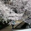 二カ領用水の桜