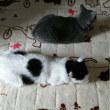 【小梅・さくら・桃之介通信】2度目の猫団子 / 寂しい見送り