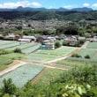 上越線敷島のお立ち台の近くからコンニャク畑と赤城山を見~る