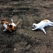 猫達の事で深く反省