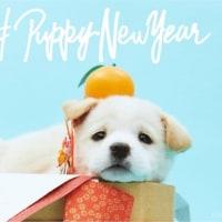 新年あけましておめでとうございます!!!~マッハGOGOの2018年~