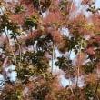 高山植物(県中央植物園)