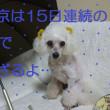 東京15日連続の雨…ヽ`、ヽ`个o(・_・。)`ヽ、`ヽ、