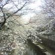 桜も終わります。
