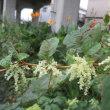 ウラナミジャノメ蝶と花と夕餉